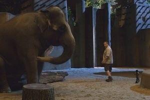 Мой парень из зоопарка 9899