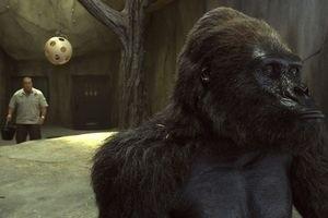 Мой парень из зоопарка 9897