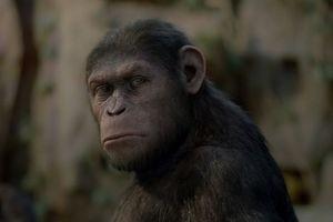 Восстание планеты обезьян 10032