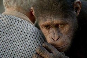 Восстание планеты обезьян 10034