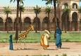 Жирафа 5