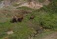 Земля медведей 16