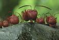 Букашки. Приключение в Долине муравьев 7