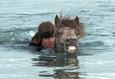 О лошадях и людях 4