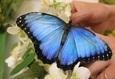 Выставка живых экзотических бабочек 2