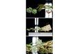 Архитектурная флористика 10