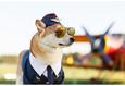 Фестиваль авиационного спорта «Пронебо» 11