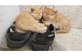 Конкурс «Тайная жизнь ваших домашних животных» 26