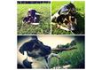 Конкурс «Тайная жизнь ваших домашних животных» 25