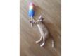 Конкурс «Тайная жизнь ваших домашних животных» 57