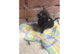 Конкурс «Тайная жизнь ваших домашних животных» 52