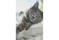 Конкурс «Тайная жизнь ваших домашних животных» 27