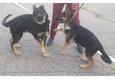 Конкурс «Тайная жизнь ваших домашних животных» 32