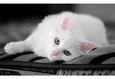 Конкурс «Тайная жизнь ваших домашних животных» 5
