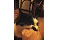 Конкурс «Тайная жизнь ваших домашних животных» 51