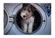 Конкурс «Тайная жизнь ваших домашних животных» 35