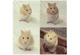 Конкурс «Тайная жизнь ваших домашних животных» 13