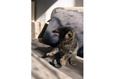 Конкурс «Тайная жизнь ваших домашних животных» 15
