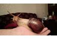 Конкурс «Тайная жизнь ваших домашних животных» 6