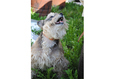 Конкурс «Тайная жизнь ваших домашних животных» 28