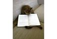 Конкурс «Тайная жизнь ваших домашних животных» 29