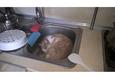 Конкурс «Тайная жизнь ваших домашних животных» 45
