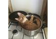 Конкурс «Тайная жизнь ваших домашних животных» 54