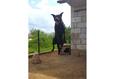 Конкурс «Тайная жизнь ваших домашних животных» 47