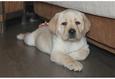 Конкурс «Тайная жизнь ваших домашних животных» 7