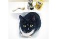 Конкурс «Тайная жизнь ваших домашних животных» 30