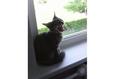 Конкурс «Тайная жизнь ваших домашних животных» 14