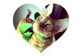 Конкурс «Тайная жизнь ваших домашних животных» 40