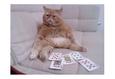 Конкурс «Тайная жизнь ваших домашних животных» 11