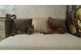 Конкурс «Тайная жизнь ваших домашних животных» 4