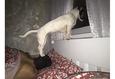 Конкурс «Тайная жизнь ваших домашних животных» 42