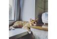 Конкурс «Тайная жизнь ваших домашних животных» 3