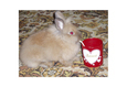 Конкурс «Тайная жизнь ваших домашних животных» 53