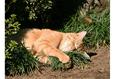 Конкурс «Тайная жизнь ваших домашних животных» 2