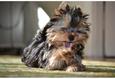 Конкурс «Тайная жизнь ваших домашних животных» 16