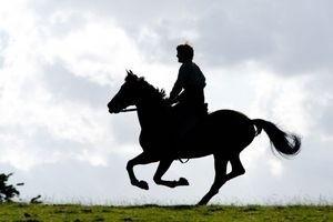 Боевой конь 11902