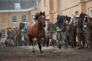 Боевой конь 11921