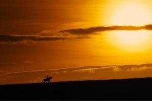 Боевой конь 11927