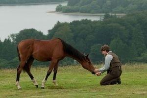 Боевой конь 11909
