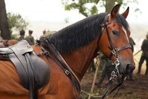 Боевой конь 11922
