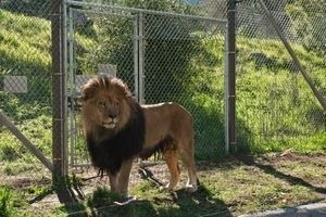Мы купили зоопарк 12610
