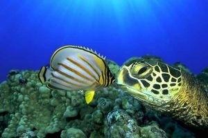 Большое путешествие вглубь океанов 3D 5520
