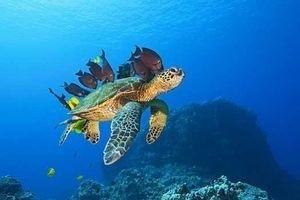 Большое путешествие вглубь океанов 3D 5516