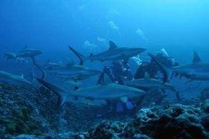 Большое путешествие вглубь океанов 3D 5512