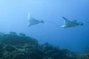 Большое путешествие вглубь океанов 3D 5517