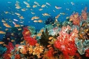 Большое путешествие вглубь океанов 3D 5513